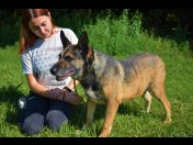 Amber to spokojny pies, który marzy o domu. Adopuj