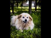 Odmień życie Clouda. Pokochaj go i adoptuj!